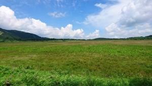 湿原DSC_0097八島